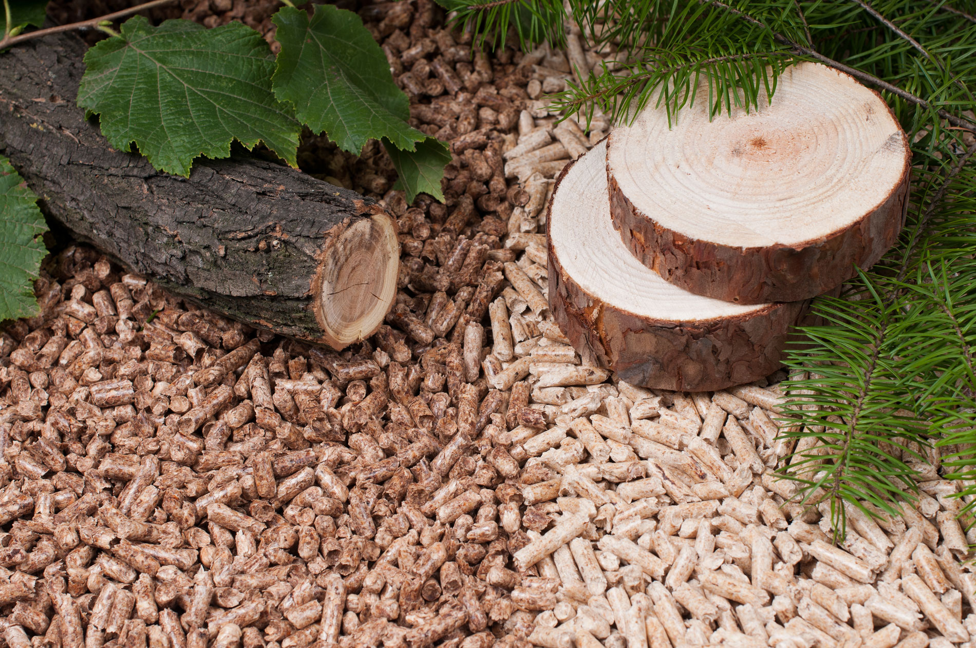 Is There A Difference Between Hardwood And Softwood Wood
